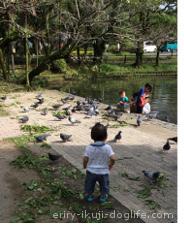 子どもと楽しむお出かけスポット 宮崎県都城市神柱公園