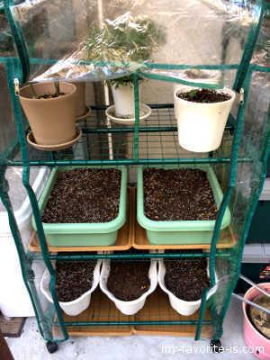 下2段に野菜のトレイ、上の1段にお花とイチゴの鉢植えを置いています