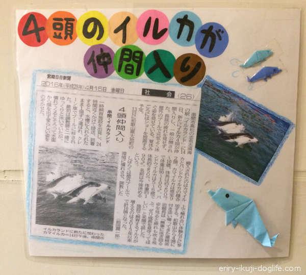 2016年4月に4頭のイルカが仲間入り、新聞記事