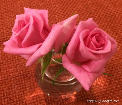 ふつうのバラ ピンクのバラ 一輪挿しに飾ってみました