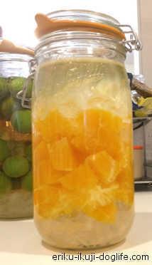 氷砂糖とホワイトリカー オレンジを使ったリキュールづくり