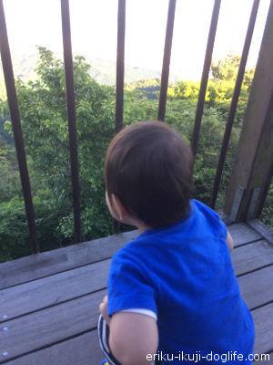 じっと景色を眺める息子 指をさして何か言っています