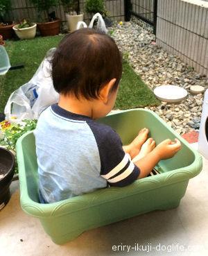 鉢の中は意外と広いんだな~と遊ぶ息子