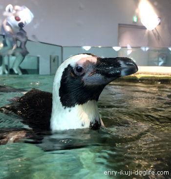 ニフレル 間近で見るペンギン