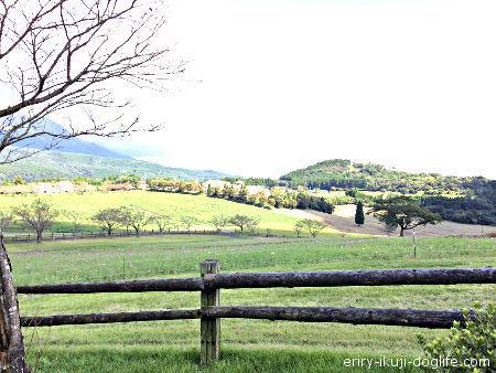 子供とお出かけ九州・宮崎・鹿児島 動物とふれあいオリジナル商品も人気の高千穂牧場