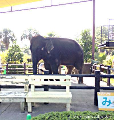 フェニックス自然動物園の人気者ゾウのみどりちゃん