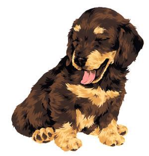 犬が誤飲、誤食したときの対処方法とは